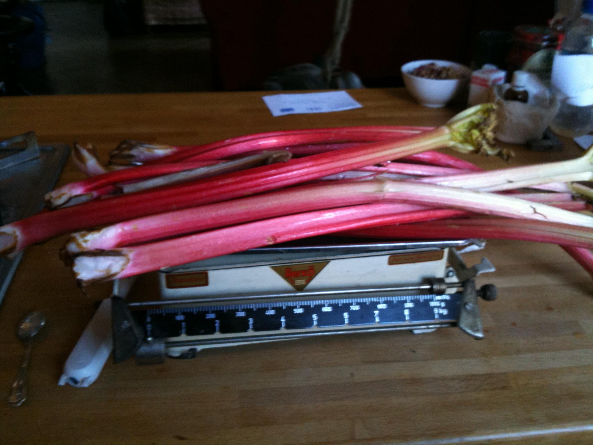 foto rhubarb pie